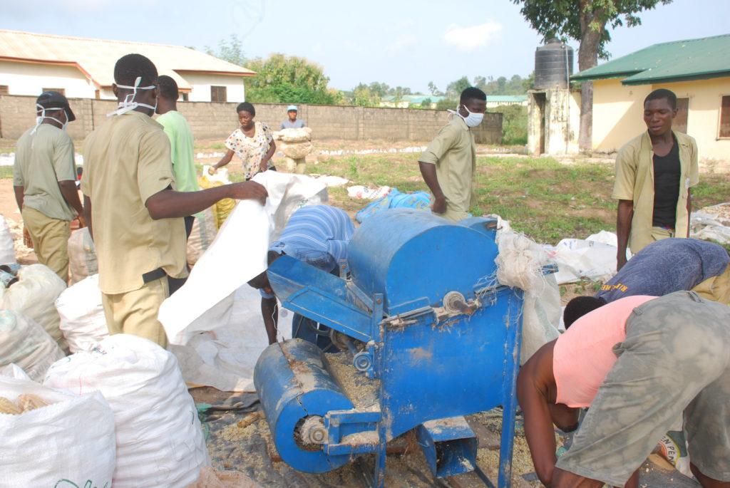Trainees Thresh Maize