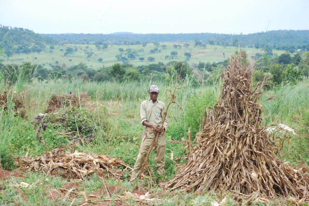 Trainees on Maize Plot