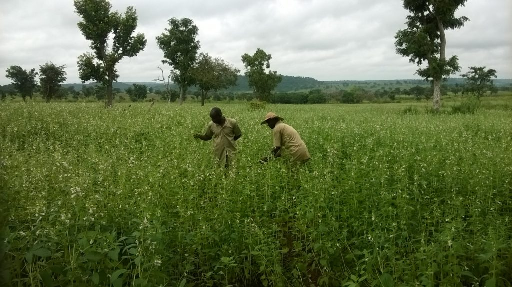 Trainees on Benniseed Plot