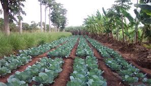 LFN Plantation