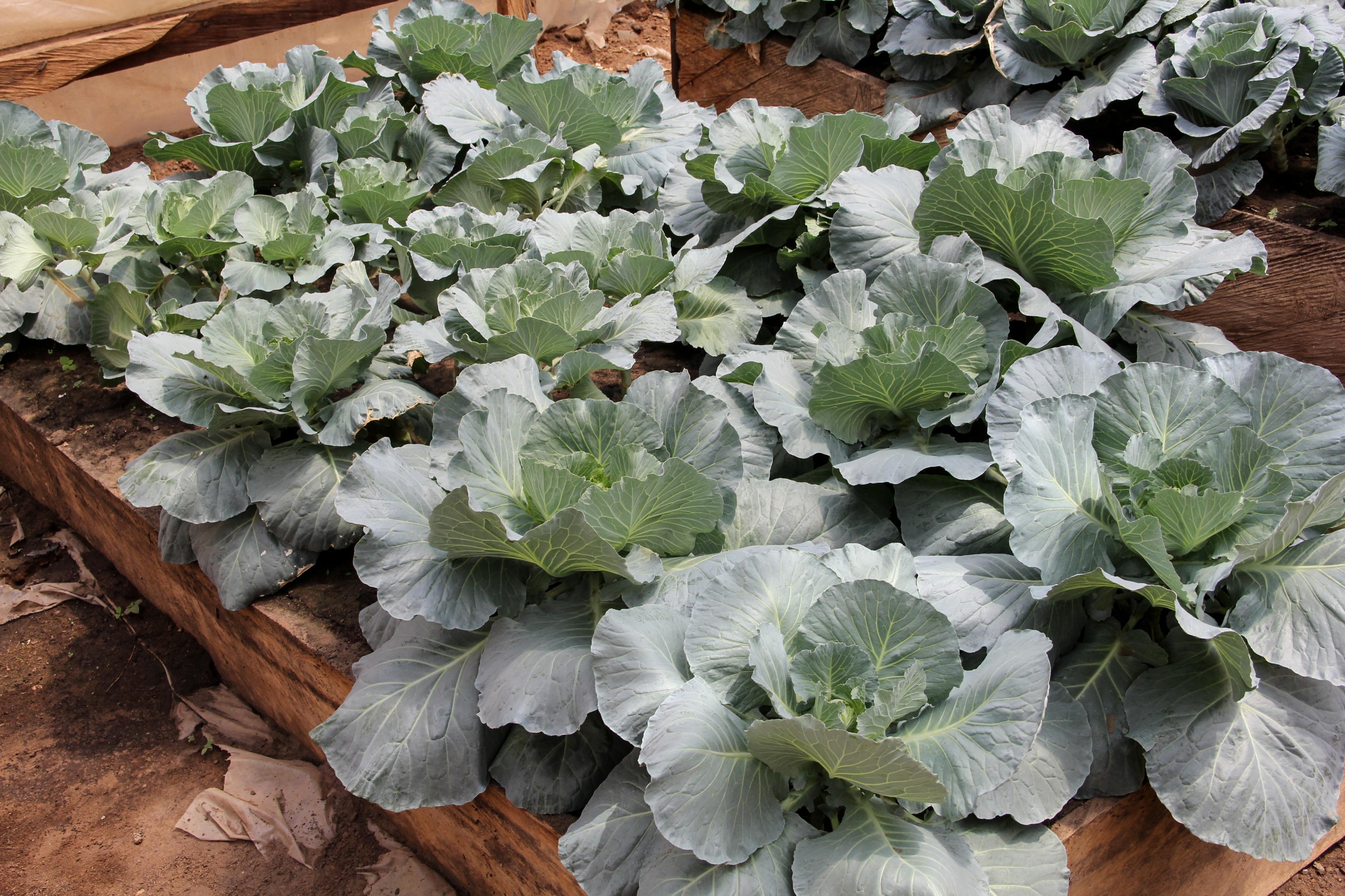 Greenhouse Yaba